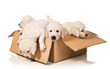 Moving With Pets Is Simpler and Faster By Hiring Los Angeles Movers