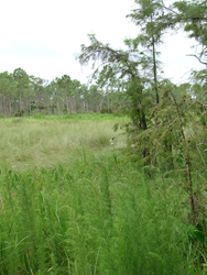 Corkscrew Swamp Sanctuary, Naples, Fla., was named a Wetland of International Importance by Ramsar with the help of Stetson Law students.