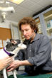 Holistic Veterinary Care Shares Tips to Promote Pet Health And Reduce...