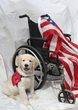 Justice, a service dog from Patriot Service Dogs, is trained to help disabled veterans perform tasks.