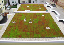 Xero Flor Green Roofs on the Silver City Townhomes