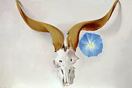 Ram's Head, Blue Morning Glory; Oil on Canvas, Georgia O'Keeffe, 1938