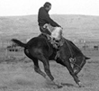 Steamboat famous Wyoming bucking horse.Photo that became the symbol  image for the state of Wyoming.