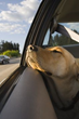 Boarding Pets for the Holidays: Do's and Don'ts for Your...