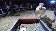 FoxFury Illuminates Entertaining Camel Milking, Turkey Racing Duo