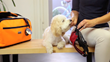 In Advance of Holiday Pet Travel, Preparation Is Essential to Ensure Safety