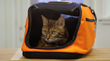 Advance preparation will help to ease stress and ensure safety when traveling with a pet.