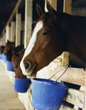 Horse Food by Bartlett Milling Company Recalled: AttorneyOne Monitors...