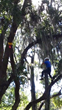 Backridge Tree Service Arborists Compete in Florida Tree Climbing...