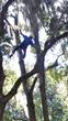 Arborist Calley