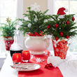 Create a Winter Wonderland for the Holidays with Stylish Indoor Plants...