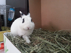 Rabbits love this timothy hay