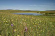 Chevrolet Invests in Greenhouse Gas Reductions through the Protection of Prairie Grasslands