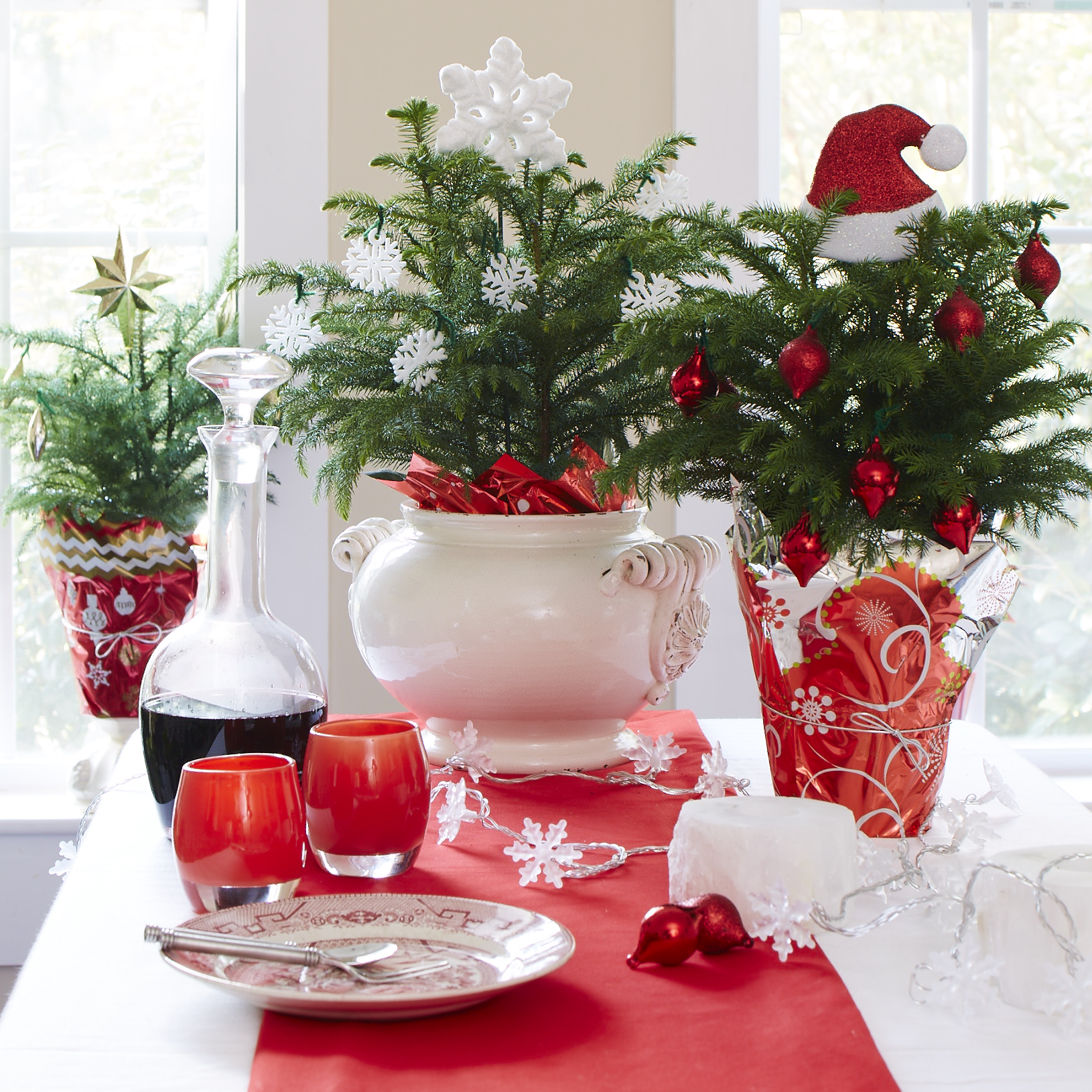 Decorating Dilemma House Plants: Last Minute Holiday Gift Ideas For Gardeners In 2014