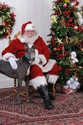Greyhound Adoption League of Texas Santa Photos