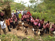 TRTH, kids in Haiti with goats from Colorado