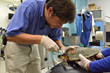 More than a Dozen Sick Sea Turtles from New England Flown Nearly 1,000...