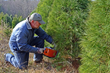 West Virginia choose-and-cut Christmas tree farms offer a variety of species and services. Find the farm closest to you: http://www.wvcommerce.org/resources/forestry/christmas_trees/default.aspx
