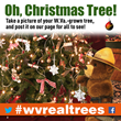 Find the perfect real tree and post a picture for all to see: www.facebook.com/wvforestry or tweet @wvforestry using #wvrealtrees.