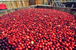 The Cranberry Marketing Committee USA Says Good News for America's...