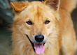 NuVet Labs Announces Thanksgiving Pet Photo Contest to Help Animal Rescue Organizations