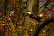 New Website Showcases Virginia Bald Eagle Photographer