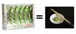 Wasabi Candy Canes Taste Like Wasabi