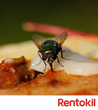 Rentokil provides Expert Advice on How to Keep Flies away during the...