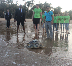 Sea Turtle Released by U.S. Government in China