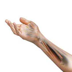 Comprehensive Management of the Elbow, Wrist and Hand