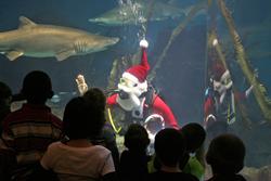 Santa-Dives-With-Sharks-MaritimeAquarium