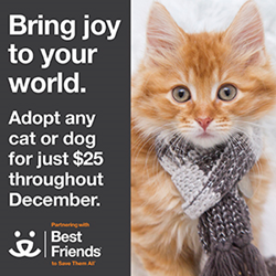 Best Friends Animal Society, holiday, adoption, cats, dogs, network partners, save them all, no more homeless pets