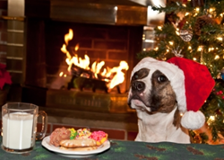 Christmas dog with sugar cookies