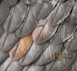 Mike Meier - Rosalina Bird - LaPeña CD Cover