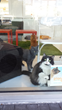 Second Cat Cafe' in United States Opens in Florida Dec. 3rd, 2014