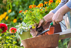 marketing tips for landscapers