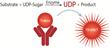 BellBrook Labs Webinar: Transcreener® HTS assays for UDP, GDP, and CMP as a Universal Glycosyltransferase Assay Platform