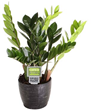 Costa Farms Turns Brown Thumbs Green with New Plants of Steel Collection