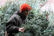 Christmas Tree NYC Offers Christmas Tree Delivery to Your Living Room...