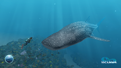 Dr. Sylvia Earle diving with a whale shark in Infinite Scuba's new Belize dive site.
