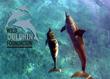 Wild Dolphin Foundation