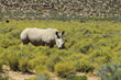 Win a South Africa Big Five Safari from Adventure Life