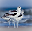 Birds Found in Strange New Areas: How Climate Change Is Altering...