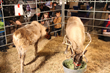 Texas Trust kept Santa's Reindeer fed during the Mansfield Toys for Tot toy drive