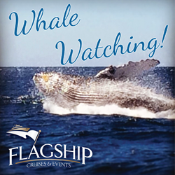 San Diego Gray Whale Watching with Flagship