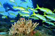 Explore the 'World's Aquarium' With Villa del Palmar at the Islands of...