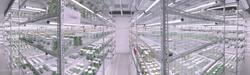 Selecta Klemm's new laboratory with Valoya LED tubes