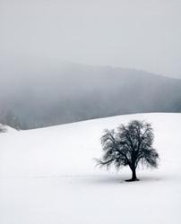 The Emotional Impact of Seasonal Affective Disorder
