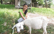 Give a Goat through Food for the Hungry's Gift Catalog this...