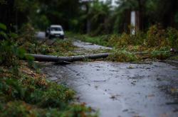emergency tree removal windstorm Everett, WA